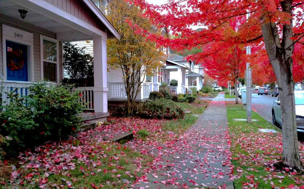 Othello_fall color